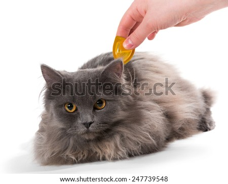 Protect the cat from ticks and fleas, isolated on white background