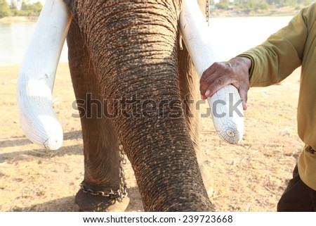 Protect the ivory,Thailand - stock photo