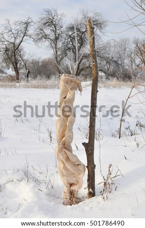 Fruit eating animal stock photos royalty free images vectors shutterstock - Protecting fruit trees in winter ...