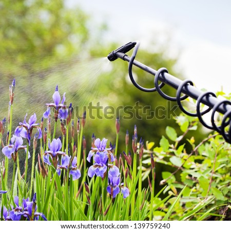 Protecting iris flower from fungal disease, gardening concept - stock photo