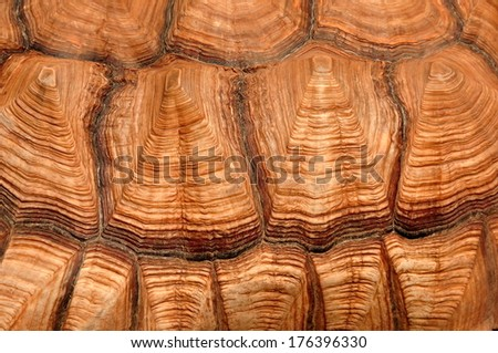 PROTECTION,African Spurred Tortoise Shell - stock photo
