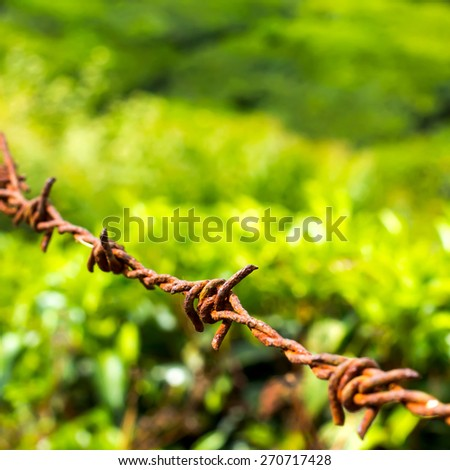 protection concept of steel barbed wire on rural green background, closeup - stock photo