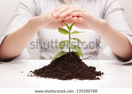 Protection of the plant - stock photo