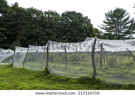 protective garden fabric draped over tree limbs