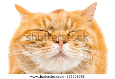 Proud ginger cat is lying, isolated on white background - stock photo