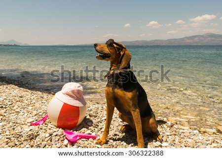Proud hunt dog portrait wearing sunglasses on the beach.  - stock photo