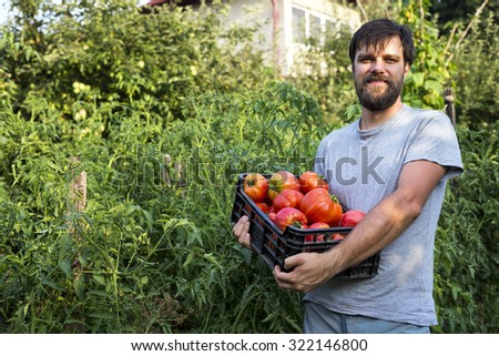 Proud young farmer holding  fresh delicious tomatoes in a plastic box in the garden - stock photo