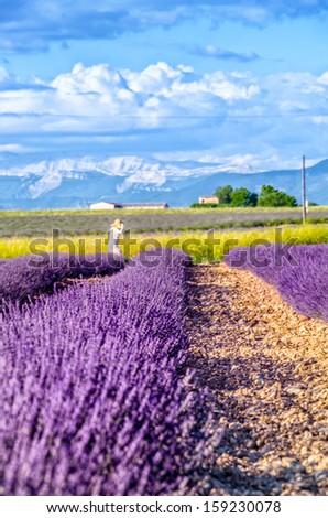 Provence, France, lavender fields - stock photo