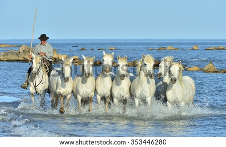 PROVENCE, FRANCE - 07 MAY, 2015: Riders and White horses of Camargue running on the water. Nature reserve in Parc Regional de Camargue.  - stock photo