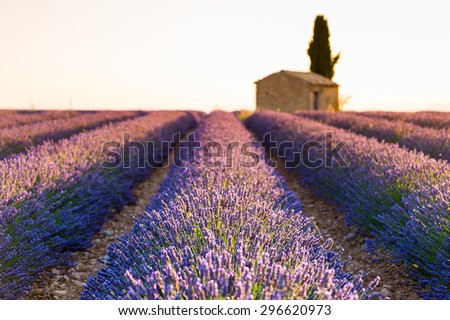 Provence, Valensole Plateau, purple lavander fields at sunset