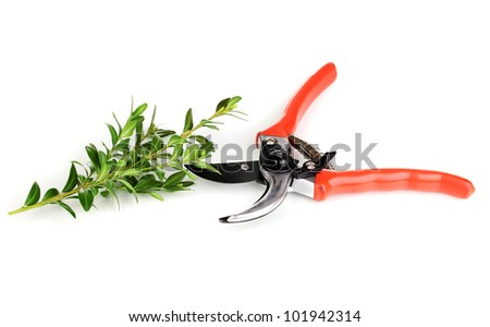 Pruner with branch isolated on white - stock photo