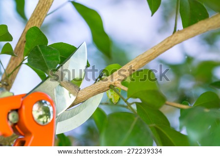 Pruning a tree branch with a garden - stock photo