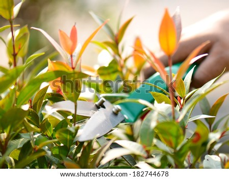 Pruning bushes in the garden - stock photo