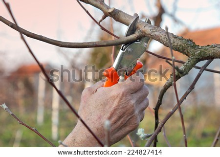 Pruning tree in orchard, selective focus on hand - stock photo