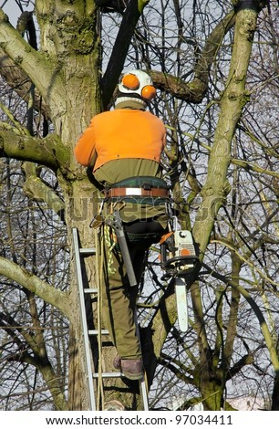 pruning trees, lumberjack amount in a tree to cut branches - stock photo