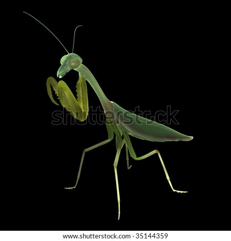 prying mantis