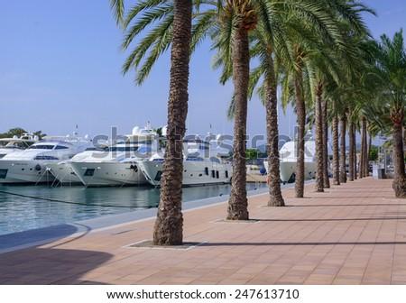 PUERTO PORTALS, MAJORCA, SPAIN - OCTOBER 27, 2013: Luxury yachts and palm trees on October 27, 2013 in Puerto Portals, Majorca, Spain.  - stock photo