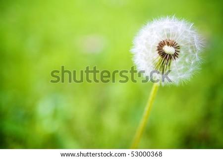 Puffball - stock photo