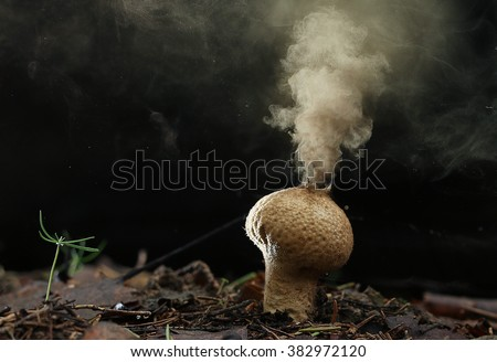 Puffball fungus spores reproduction smoke mushroom - stock photo