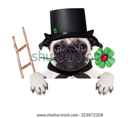 pug dog as chimney sweeper with four leaf clover  behind white banner or placard, celebrating and toasting for new years eve, isolated on white background - stock photo