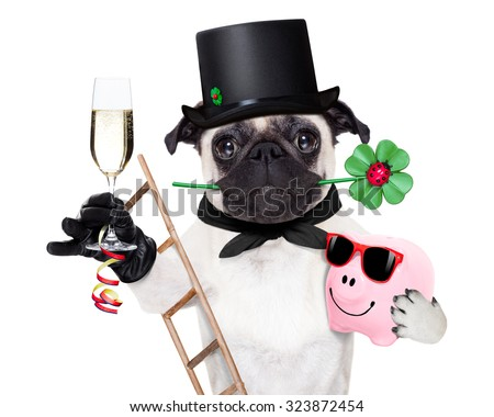 pug dog as chimney sweeper with four leaf clover  celebrating and toasting for new years eve,with champagne,  isolated on white background - stock photo