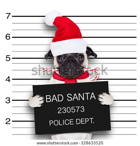 pug dog as santa claus for christmas holidays, caught on mugshot with sugar cane in mouth - stock photo