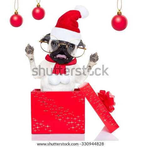 pug dog as santa claus jumping out of a gift  box at christmas holidays,isolated on white background - stock photo