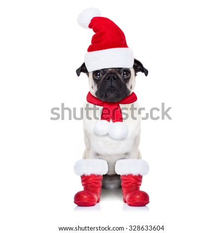 pug dog as santa claus with red boots, for christmas holidays, looking dumb, isolated on white background
