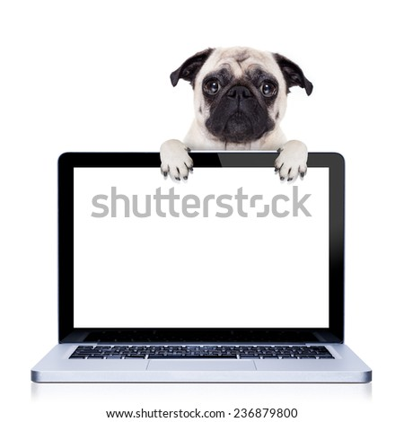 pug  dog  behind a laptop pc laptop computer screen, isolated on white background - stock photo