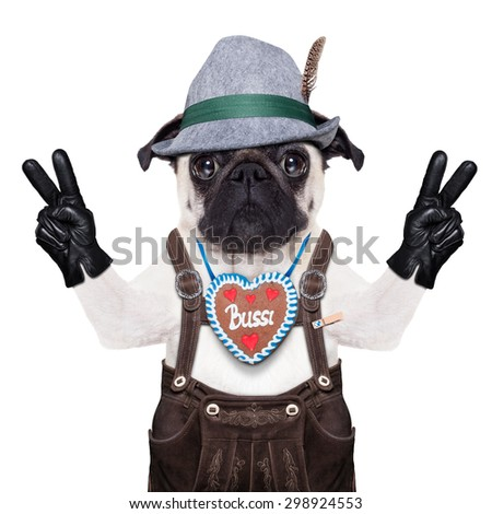 pug dog dressed up as bavarian,isolated on white background,with peace or victory fingers