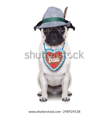 pug dog dressed up as bavarian with gingerbread as collar, isolated on white background