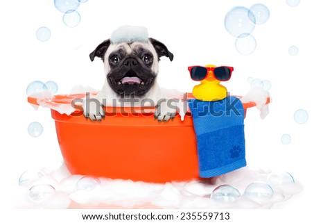 pet beauty treatment salon stock photos royalty free