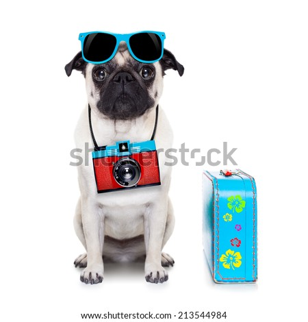 pug dog looking so cool with fancy sunglasses  and photo camera - stock photo