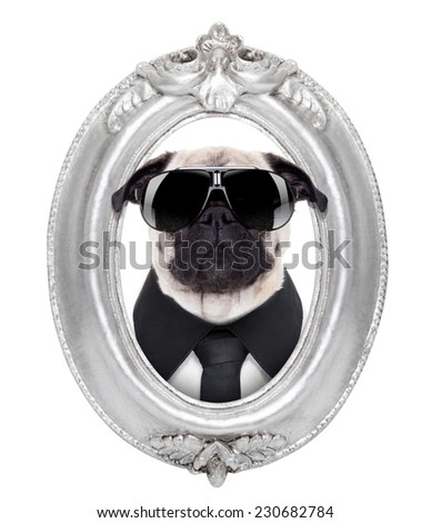 pug dog portrait in a wooden retro old frame , isolated on white background - stock photo
