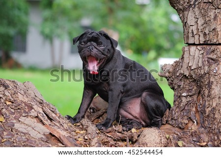 Pug dog sitting on stump with blurry background.