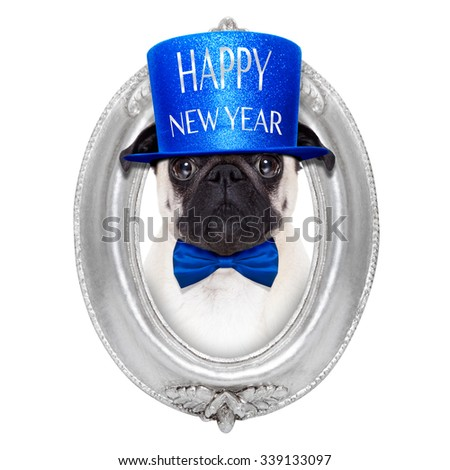 pug dog  toasting for new years eve inside an oval frame,  isolated on white background