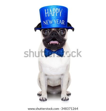 pug dog  toasting for new years eve , isolated on white background - stock photo