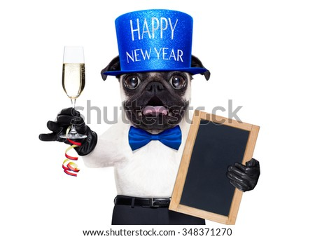 pug dog  toasting for new years eve with champagne glass holding a banner or placard isolated on white background