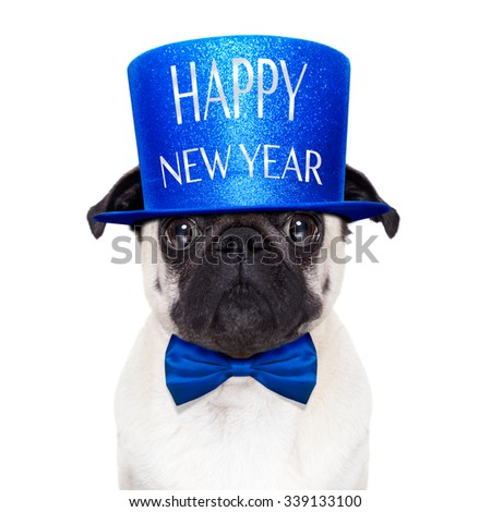 pug dog  toasting for new years eve with  hat ,  isolated on white background