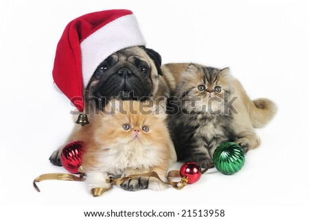 Pug dog wearing Santa hat with two little Persian kittens, surrounded by Christmas ornaments. - stock photo