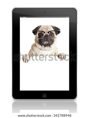 Pug Dog  with blank billboard. Dog above banner or sign. Pug dog with  glasses  over white background.  pet shop concept.  - stock photo