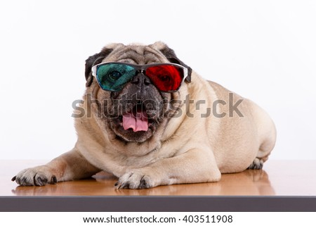 Pug dog with 3D glasses, isolated on white, looking at camera - stock photo
