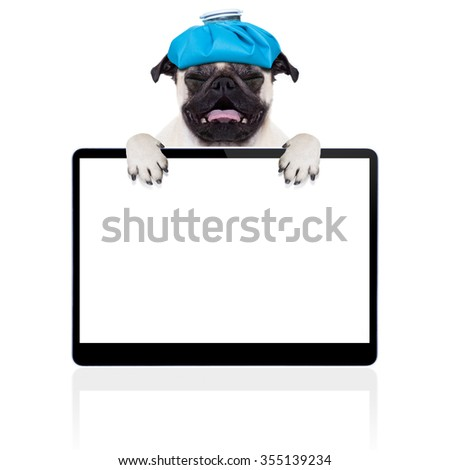 pug  dog  with  headache   isolated on white background behind laptop tablet pc screen  - stock photo