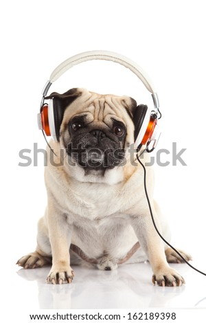 pug dog with headphone isolated on white background