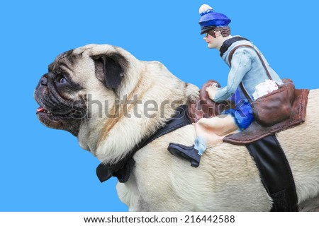 Pug dog with rubber puppet rider on blue background - stock photo