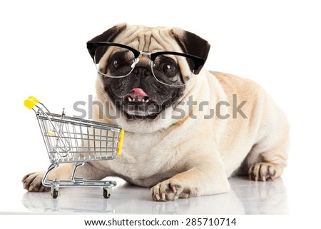 Pug dog with shopping cart isolated on white. Dog with glasses