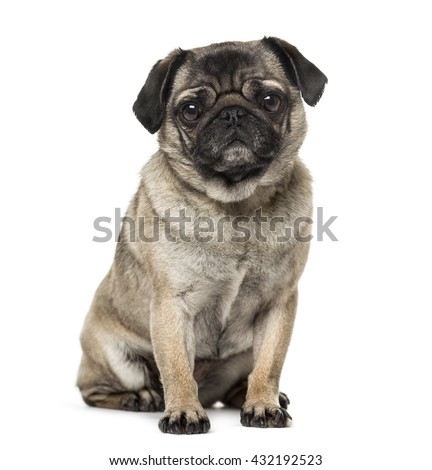 Pug looking at the camera, sitting and isolated on white