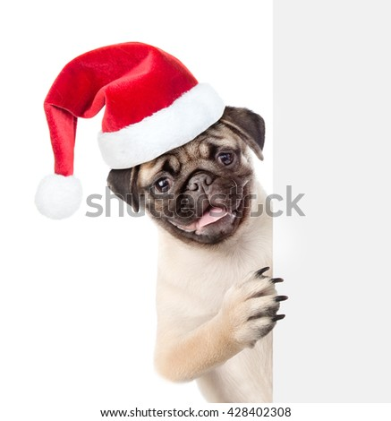 Pug puppy in red christmas hat peeking from behind empty board. isolated on white background - stock photo