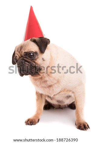 Pug puppy wearing a festive hat, isolated over a white background