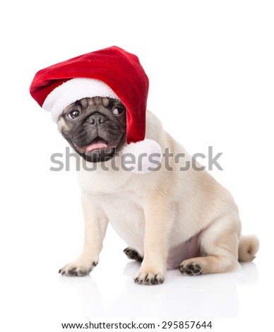 pug puppy with red santa hat. isolated on white background - stock photo